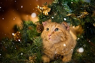These Cats Were Awestruck With Christmas Decorations & Their Parent Captured The Moments