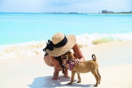 A Puppy Island That Lets You Cuddle Puppies On The Beach Or Even Adopt Them