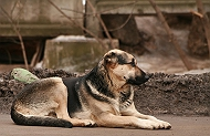 Stray Dog frightens people in Manjalpur, Vadodara