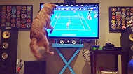 Dog hops like a Tennis Ball while watching Tennis Match...!!