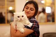 PetFed: We are Back with Mumbai Kitty Bash 2.0!