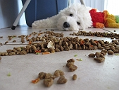 Protein in Dry Dog Food : Quality Vs Quantity