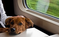 Why Is Indian Transport System So Against For Pets?