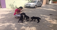 Avnika The Superwoman For 38 Stray Dogs