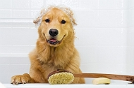 6 Easy DIY, Natural Homemade Dog Shampoo Recipes For Your Furballs | Dogspot.in