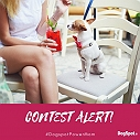 CONTEST ALTERT - #DogspotPowerMom | Mother's Day