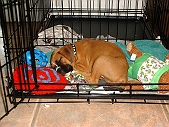 Crate Training: The best method to set your pet into its cage