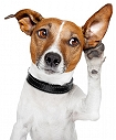 4 EASY WAYS TO MAKE YOUR DOG LISTEN