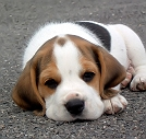 Dog names & puppy names