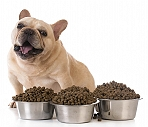 Tips for selecting Dog Food