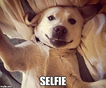 15 DOGS WHO NEED TO WORK ON THEIR SELFIE SKILLS