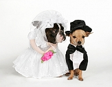 Dog wedding or business of managing events!