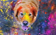 Holi Tips for Dog Owners: Celebrating the right way!