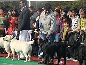 Dog Show Lucknow