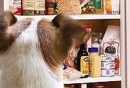 9 Surprisingly Common Foods That Are Slowly Killing Your Dog