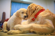 Here's The Quick Guide To Introduce Your Puppy To  A New Dog