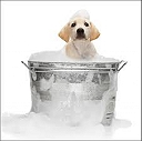 Bathing a dog?