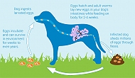 Importance Of Deworming In Pets & Related Medicines