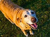 Here's How Adopting a Senior Doggo Can Change Your Life | Dogspot.in