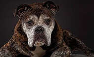 Senior Dogs - The four legged treasures