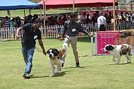 Ooty Dog Show 2010