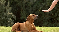 5 essential commands your dog must know