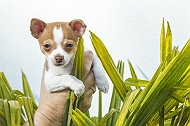 6 Top Aggressive Dog Breeds