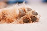 How To Take Care Of Your Dogs Paw | Dogspot.in