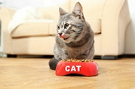 Is Grain-Free Food For Your Cat A Better Choice? | Dogspot.in