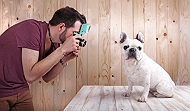 4 Simple Steps On How To Take Best Pictures  Of Your Poochie | Dogspot.in