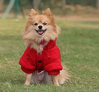 Touchdog Leisure Sport Style Hood Jacket - Medium