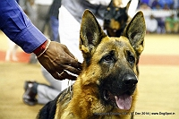 Bangalore Canine Club 2014