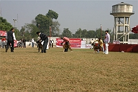 Bareilly Dog Show