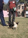 Delhi Dog Show 2010 - some pix