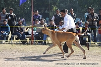 Doon Valley Kennel Club, 5 Dec 2010