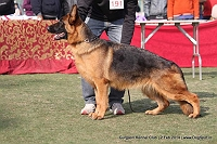 Gurgaon Dog Show (2 Feb 2014)