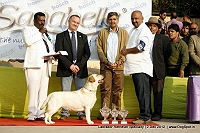 Labrador Retriever Specialty Dog Show New Delhi