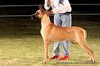 Mohali Kennel Club