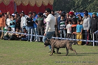 Patiala Dog Show 2013