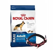 Royal Canin Maxi Adult - 4 Kg With Ergocomfort Dog Collar Large-Red