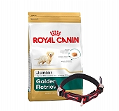 Royal Canin Golden Retriever Junior - 3 Kg With Ergocomfort Dog Collar Small-Red