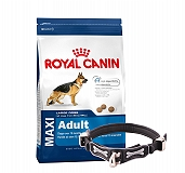 Royal Canin Maxi Adult - 4 Kg With Ergocomfort Dog Collar Large-Black