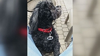 dog-grooming-salon-responsible-for-dog-death-faces-backlash