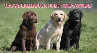 10-dog-breeds-suitable-for-first-time-owners