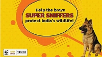 campaign-raising-funds-to-ensure-sniffer-dogs-stop-illegal-wildlife-trade-in-india