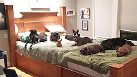 man-crafts-a-massive-bed-for-a-couple-and-their-8-dogs