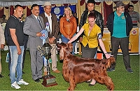 ooty-dog-show-dog-lovers-delight