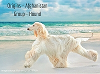 wagpedia-101-the-majestic-afghan-hounds