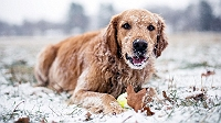 winter-is-coming-here-are-7-ways-to-care-for-your-dog