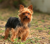 8-most-dangerous-dog-breeds-you-should-never-keep